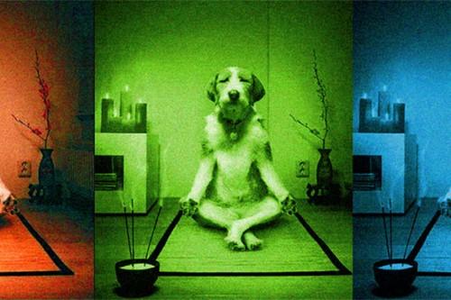 My Adventures in Vipassana Meditation